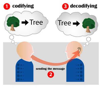 the talking heads model of communication transfer